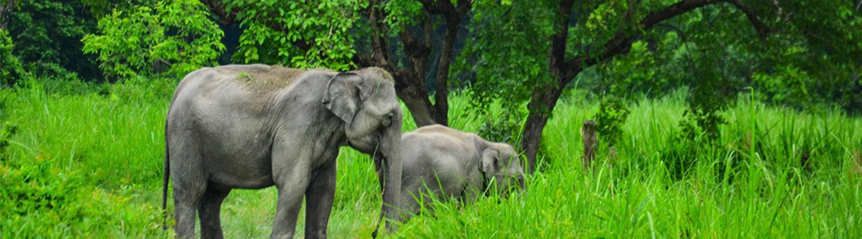 Cover of Wildlife Tourism