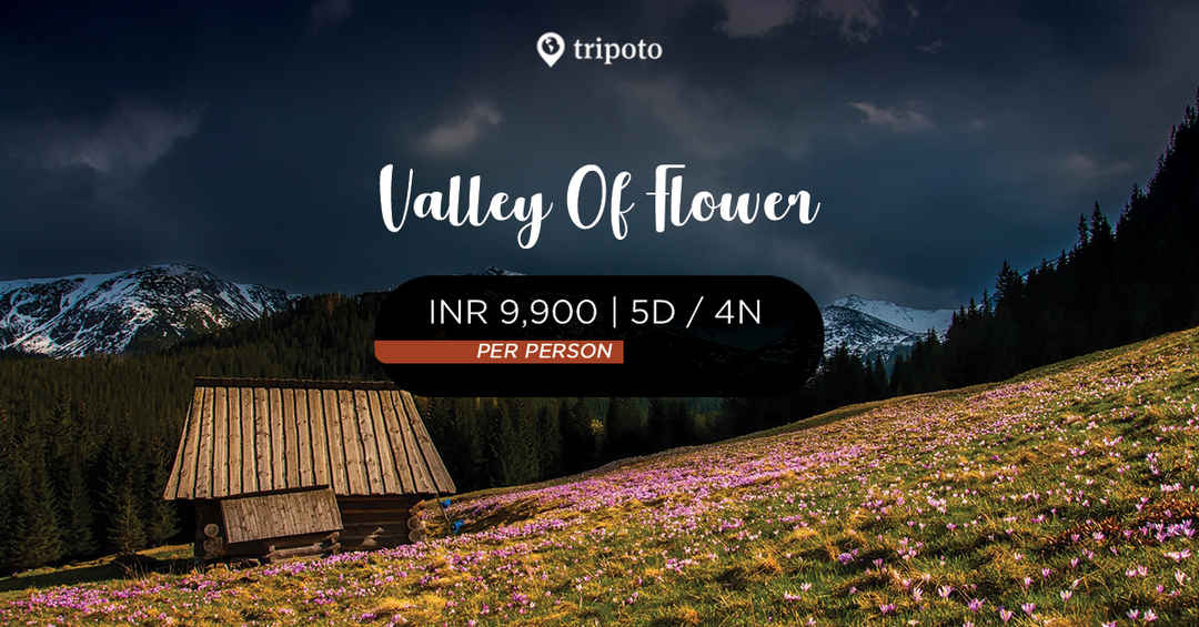 Photo of Valley Of Flowers