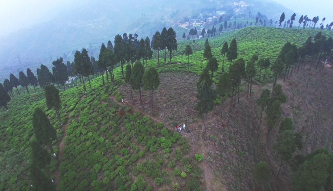 thumbnail of A Stunning Tea Estate In Darjeeling