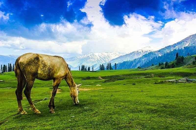 Photo of Kashmir Dream Tour