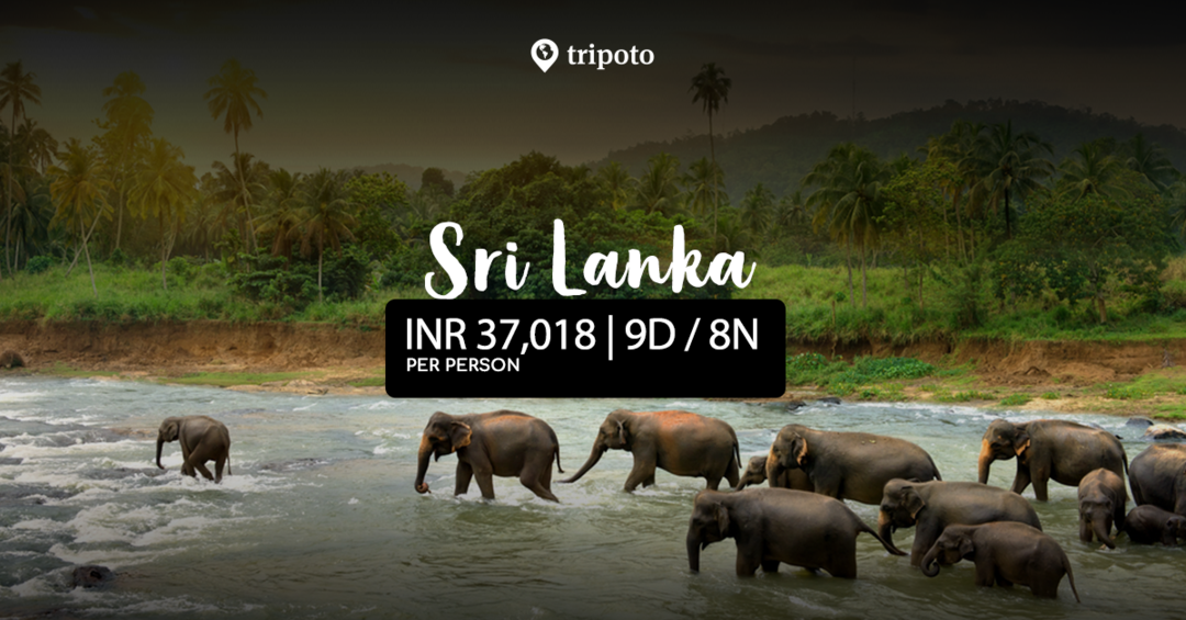 Photo of 9 Days Tour in Srilanka