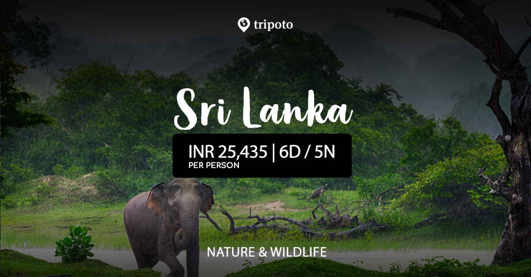 Photo of Explore the Wildlife of Srilanka